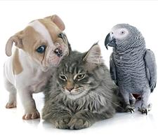 Michigan Pet Sitter
