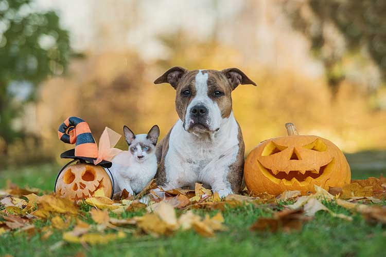Michigan 2018 Halloween Pet Sitting