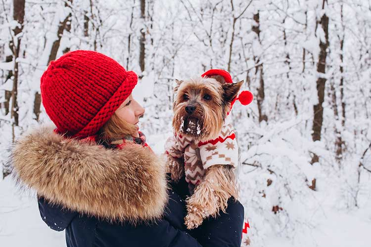 Michigan Winter Pet Sitter 2019 2020