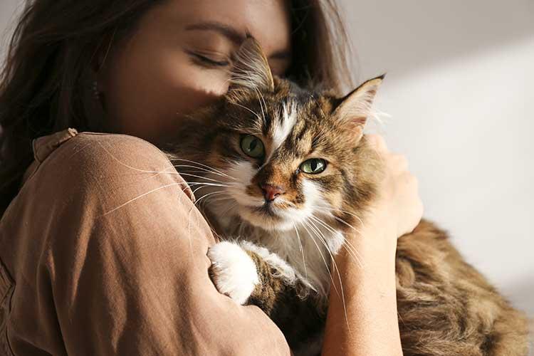 2020 Cat Sitter Pet Nanny