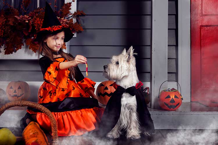 Michigan Halloween 2020 Pet Sitter Tips Pet Nanny
